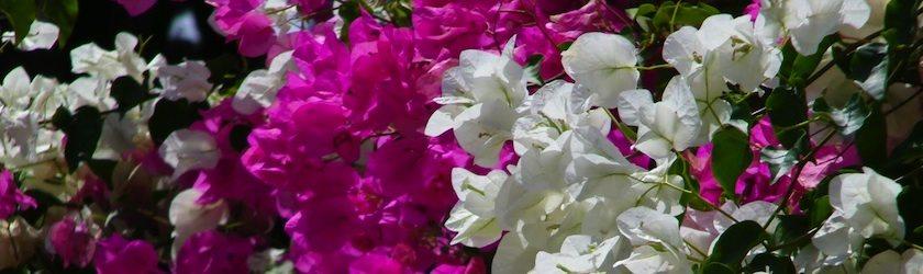 Alcuni dei nostri fiori
